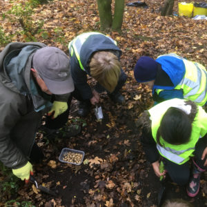 Friends of Chat Moss help children from St Teresas school plant English bluebells - November 2018.